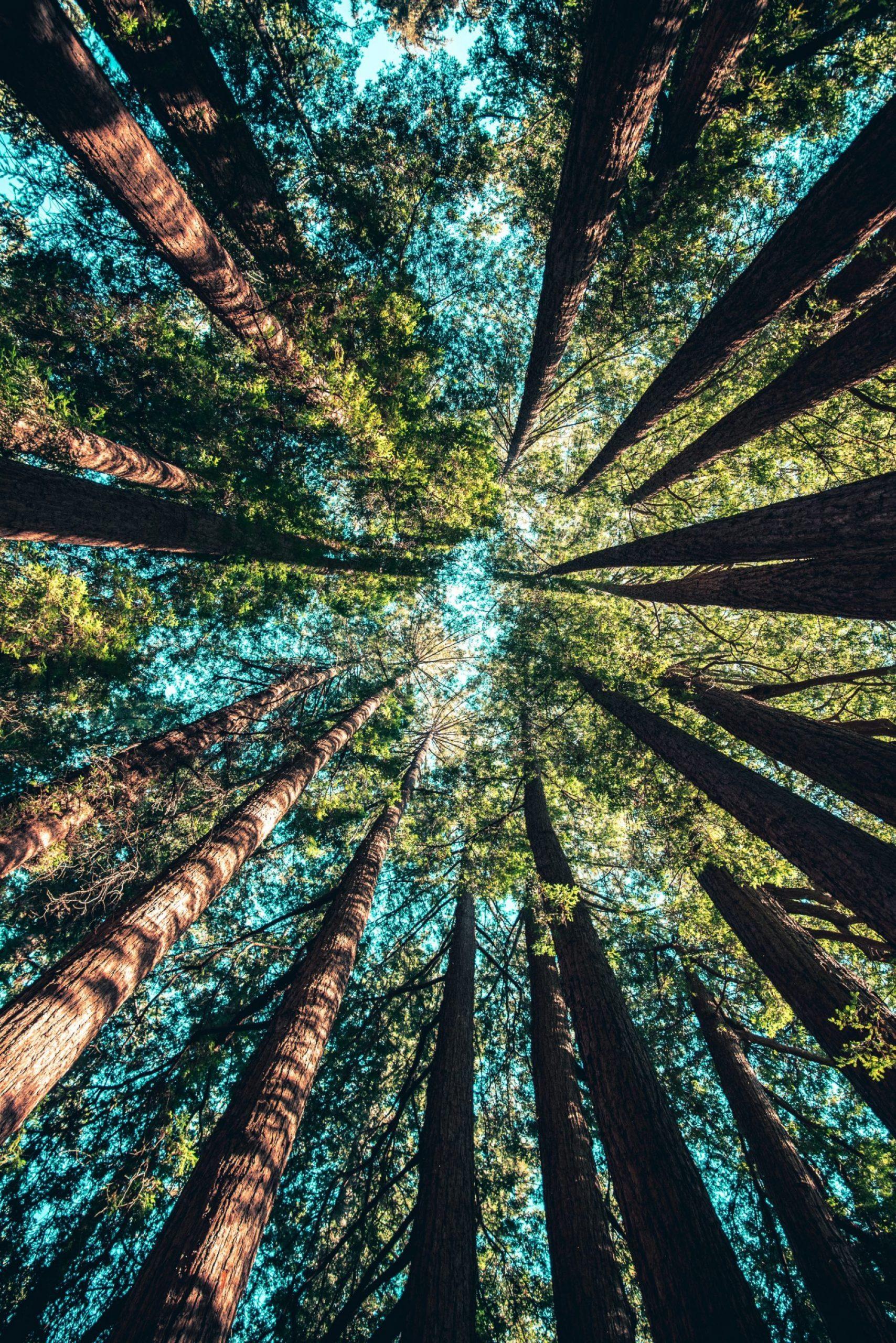 Zdokonaľovanie životného prostredia podľa Martina Sirotku